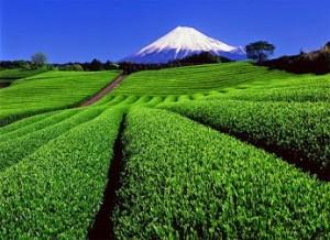 Penduduk Jepun Mempunyai Jangka Hayat Tertinggi
