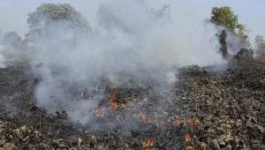 Jerebu Teruk di Sumatera Akibat Kebakaran Hutan